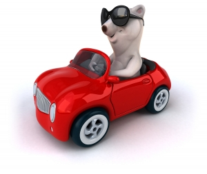 Bear driving car